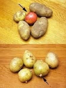 preserve potatoes