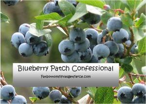 Blueberry plant Capture