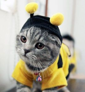 Dress Up Your Pet