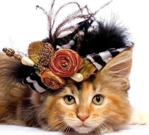 Dress Up Your Pet